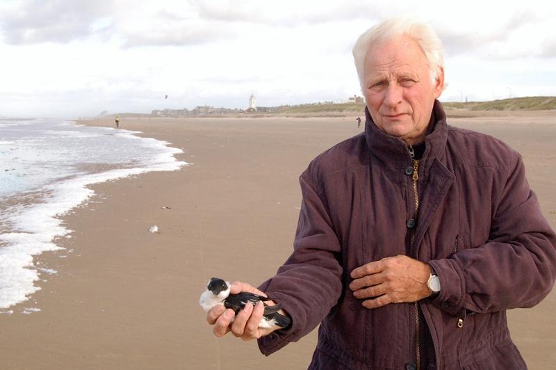 Katwijk strand Kleine Alk