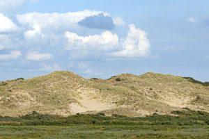 Stuifduin dichtgroeiend uitdovend Berkheide Kalahari