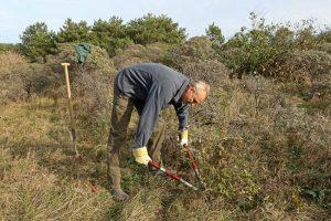 vrijwilliger Amerikaanse Vogelkers bestrijding Berkheide
