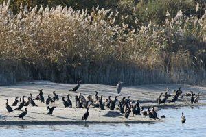 strandje Grote Meer Berkheide Aalscholvers