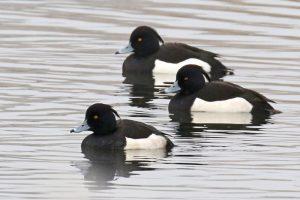 Vogels Berkheide vogelwerkgroep