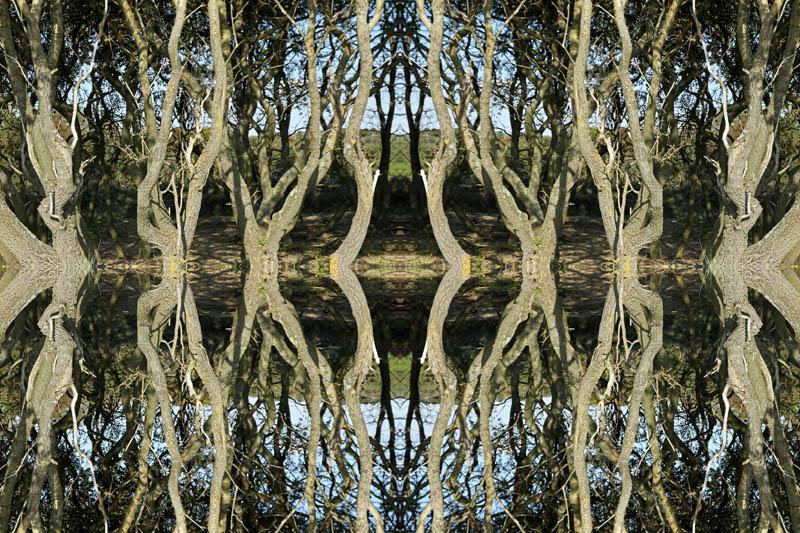 bosje gespiegeld Berkheide