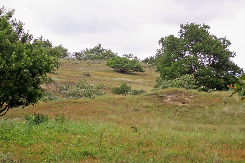 Berkheide schapen begrazing landschap