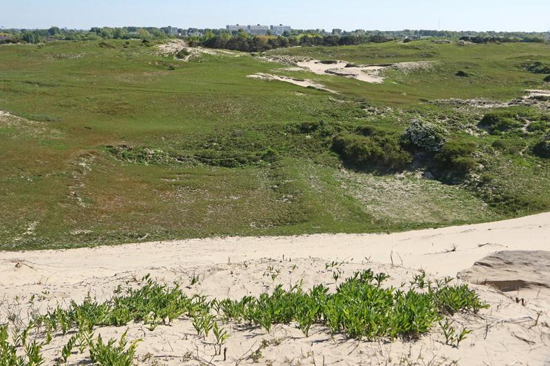 Coepelduynen verdroogde landjes Ted Hoeks Katwijk duinen