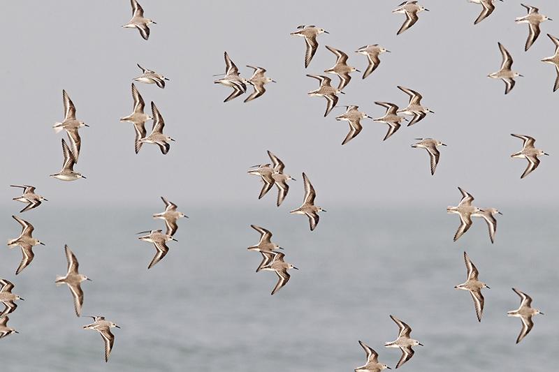 Berkheide vogels planten Lentevreugd