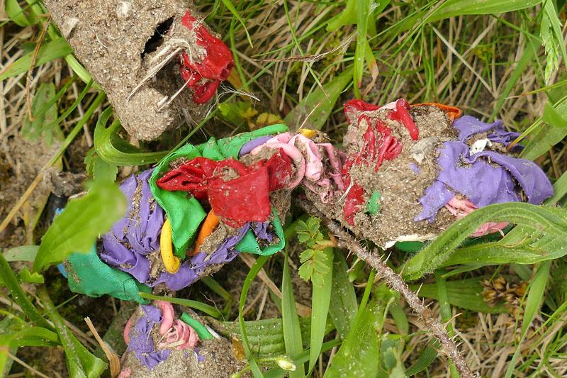 vos drol ballonnen kleurig Berkheide Vlaggeduin