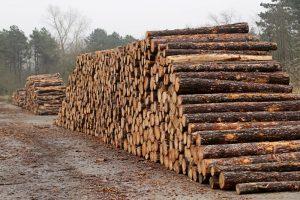 stapel hout dennen dunnen Ganzenhoek Wassenaar