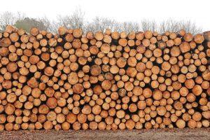 stapel hout dennen Ganzenhoek dunnen Duinoord