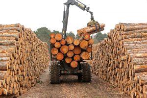 hout stapels Ganzehoek Berkheide