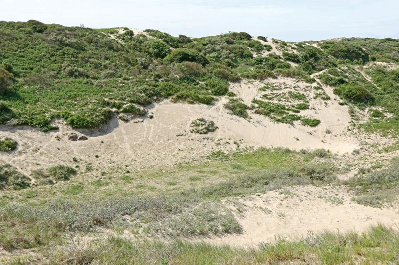 Coepelduynen C2 Spijkerdel duinen